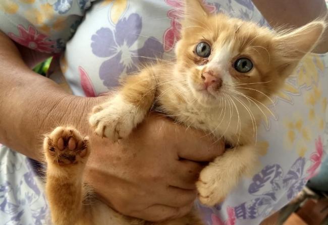 campanha-abril-laranja-alerta-para-maus-tratos-a-animais