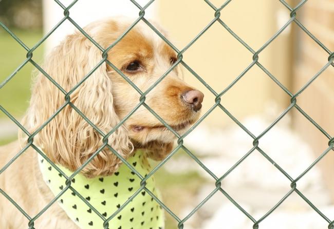 facebook-proibe-venda-de-animais-usuarios-podem-denunciar-acao