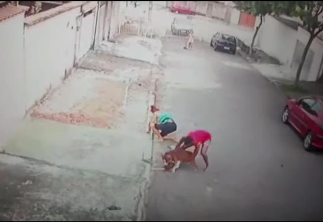 jovem-que-salvou-menino-de-ataque-de-pitbull-havia-abandonado-o-animal